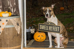 Trick or Treat...Smell my Feet Royalty Free Stock Photo