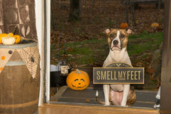 Trick or Treat...Smell my Feet Royalty Free Stock Photos