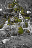 Trickeling stream. Stream flowing through Colorado forrest Royalty Free Stock Photos