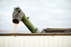 Trickle of corn kernels from a combine harvester Royalty Free Stock Photos