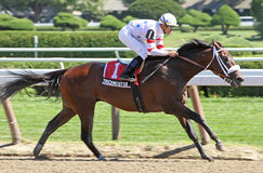 Trickmeister Wins The Pleasant Colony Stakes Royalty Free Stock Images