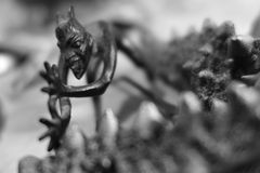 Trickster. Black an white macro composition with small objects Royalty Free Stock Photo