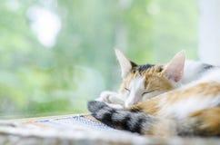 Tricolor кот спать около окна Ленивый стоковая фотография