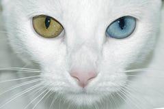 tricolor stockbild