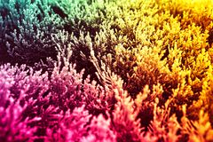 Tricolor abstract background yellow, green, pink. Plants. royalty free stock image