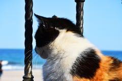 Cute tortoiseshell cat stock photo