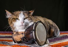Tricolor cat guards the Djembe drum on a colorful rug stock photo