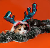 Tricolor cat lies in Christmas tinsel on orange Stock Photography
