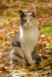 Tricolor cat from a shelter Stock Photos