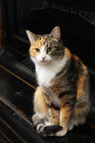 Tricolor cat sits on the piano Royalty Free Stock Photos