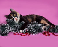 Tricolor cat wrapped Christmas tinsel, lying on pink Royalty Free Stock Photo
