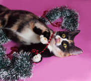 Tricolor cat wrapped Christmas tinsel, lying on pink Stock Images