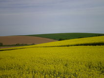 Tricolor fields Stock Image