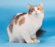 Tricolor fluffy cat sits Stock Photo