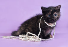 Tricolor fluffy kitten with beads around neck sits on purple Stock Photo