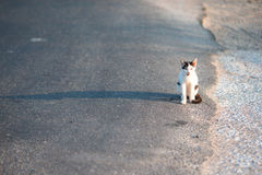 Tricolor homeless cat on the road in Greece Stock Photo