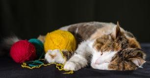 Tricolor katt som sover krama en boll av gult rött blått garn royaltyfria foton