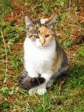 Tricolor kitten Stock Photo