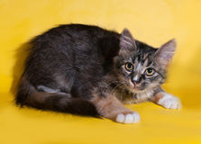 Tricolor kitten lying on yellow Royalty Free Stock Images