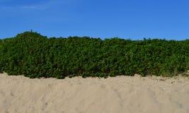 Tricolor przy plażą Zdjęcia Stock