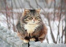 Marcowy kot na spacerze Zdjęcia Royalty Free