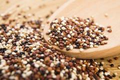 Tricolor quinoa grain Royalty Free Stock Photo