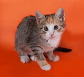 Tricolor striped kitten sitting on orange Stock Photo
