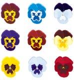 tricolor viola stock illustrationer