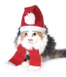 Tricolored Christmas cat Royalty Free Stock Photography