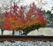 Tricolored träd Arkivbild