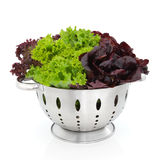 Tricolour Lettuce Royalty Free Stock Image