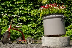 Tricycle in garden Stock Images