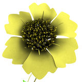 Tridax Royalty Free Stock Images