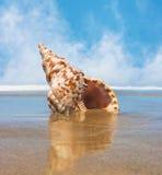 Trident Shell images libres de droits