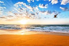 Trieb morgens mit erstaunlichem Sonnenaufganghimmel Stockfotografie