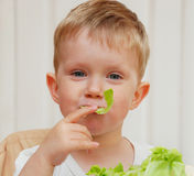 TRIES CABBAGE ON TASTE Royalty Free Stock Image