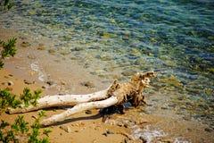 TRIESTE, WŁOCHY - 21 2013 LIPIEC: czysty morze blisko Miramare kasztelu, Trieste, Włochy Obraz Stock