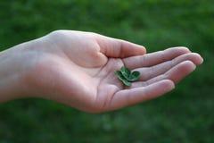 Trifoglio di Fourleafed in mano femminile Fotografia Stock