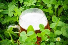 Trifoglio e birra Fotografia Stock Libera da Diritti