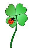 Trifoglio e ladybug Fotografia Stock Libera da Diritti
