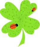 Trifoglio verde Immagini Stock