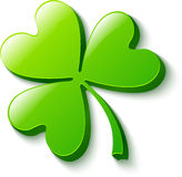 Trifoglio verde isolato su bianco Fotografia Stock