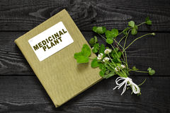 Trifolium repens or the white clover and directory medicinal pla Royalty Free Stock Photography
