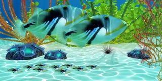 Triggerfish Fotografia Stock Libera da Diritti