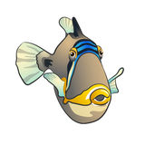 Triggerfish de Picasso Poissons d'isolement sur le fond blanc Photo libre de droits