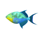 Triggerfish Royalty Free Stock Photos