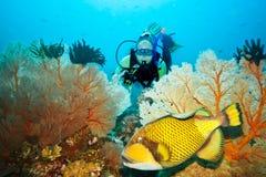Triggerfish et plongeur Image libre de droits