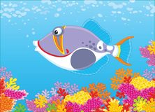 Triggerfish on a reef. A funny trigger fish swimming in blue water over colorful corals in a tropical sea, a vector illustration in cartoon style Stock Photo