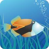 Triggerfish tropicale della scogliera sotto acqua Immagini Stock