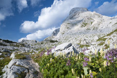 Triglav Lakes Valley. With flowers in the foreground, mountain peak in the background Stock Images